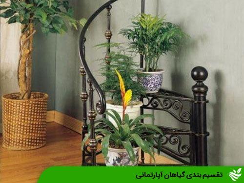 تقسیم بندی گیاهان آپارتمانی