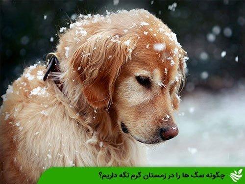 چگونه سگ ها را در زمستان گرم نگه داریم؟