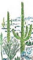 آشنایی با گیاهانی که در آپارتمان و خارج از آپارتمان می توان نگهداری کرد