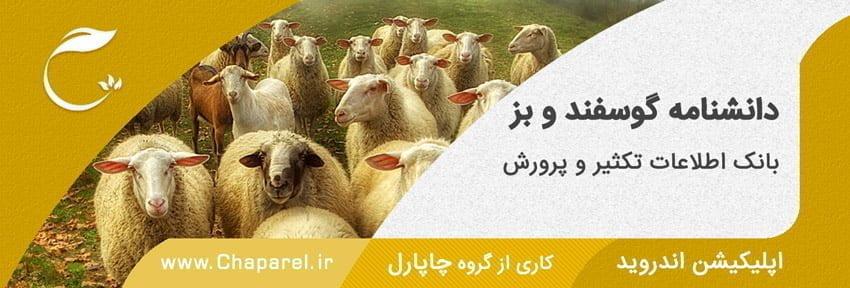 دانشنامه پرورش گوسفند و بز