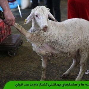 توصیه ها و هشدارهای بهداشتی کشتار دام در عید قربان