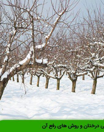 نیاز سرمایی درختان و روش های رفع آن