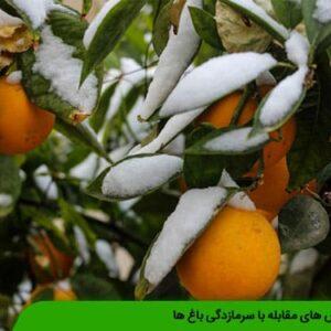 روش های مقابله با سرمازدگی باغ ها