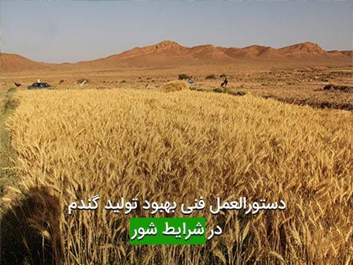 دستورالعمل فنی بهبود تولید گندم در شرایط شور