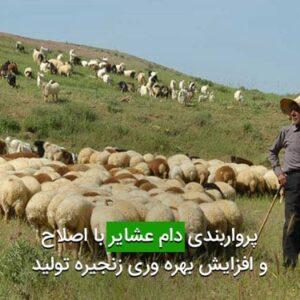 پرواربندی دام عشایر با اصلاح و افزایش بهره وری زنجیره تولید