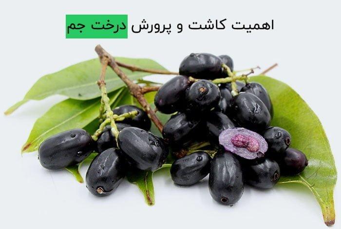 اهمیت کاشت و پرورش درخت جم