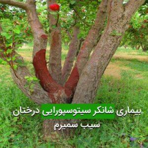 بیماری شانکر سیتوسپورایی درختان سیب سمیرم