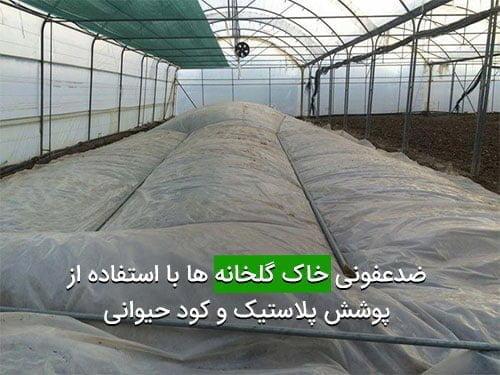 ضدعفونی خاک گلخانه ها با استفاده از پوشش پلاستیک و کود حیوانی