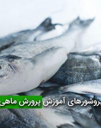 بروشورهای آموزش پرورش ماهی