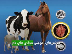 بروشورهای آموزشی بیماری های دام