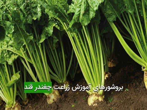 بروشورهای آموزش زراعت چغندر قند