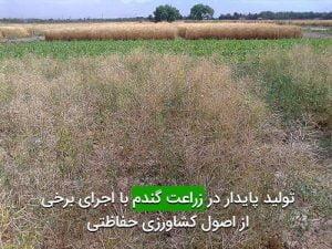 توليد پايدار در زراعت گندم با اجرای برخی از اصول كشاورزی حفاظتی