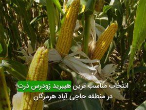 انتخاب مناسب ترين هيبريد زودرس ذرت در منطقه حاجی آباد هرمزگان