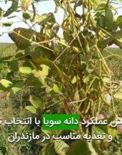 افزايش عملكرد دانه سويا با انتخاب تراكم و تغذيه مناسب در مازندران