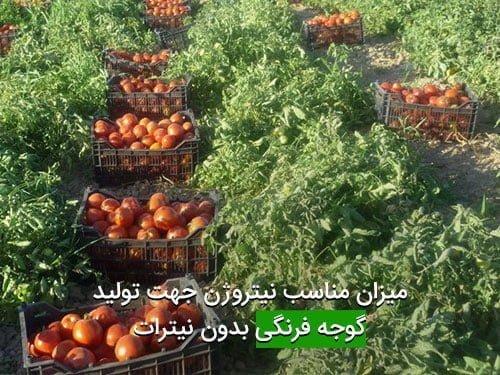 ميزان مناسب نيتروژن جهت توليد گوجه فرنگی بدون نيترات