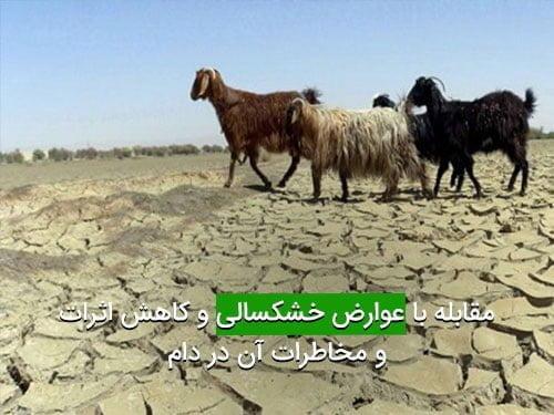 مقابله با عوارض خشکسالی و کاهش اثرات و مخاطرات آن در دام