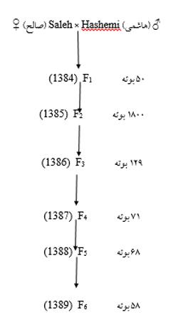 شکل 1 - نمودار اصلاحی خالص سازی لاین های حاصل از تلاقی هاشمی و صالح