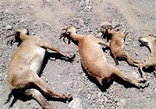 مرگ حیوانات
