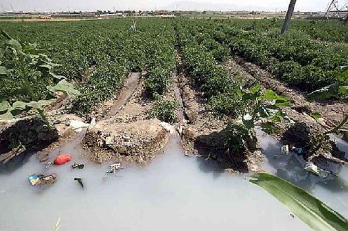 آب آلوده مزارع