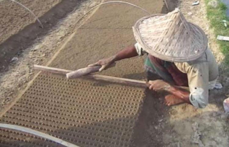 تنظیم عمق کاشت بذر گوجه فرنگی جهت تولید نشا در خزانه