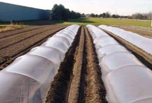 تونل های پلاستیکی شفاف بر روی خزانه تولید نشا گوجه فرنگی