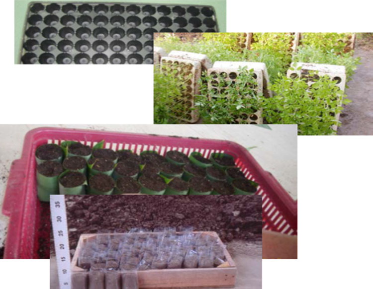 ظروف مختلف برای پرورش نشا گوجه فرنگی، شامل سینی نشا پلاستیکی و چوبی، گلدان های قابل تجزیه و پلاستیکی