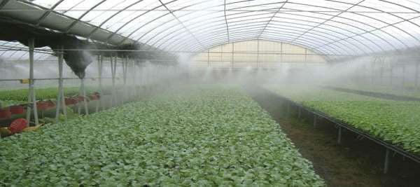 نمائی از مه آبیاری در گلخانه