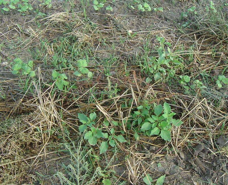 حفظ و افزایش ذخیره رطوبتی خاک در روش خاک ورزی حفاظتی