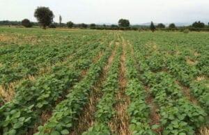 چرا کشاورزی حفاظتی برای حفظ رطوبت خاک مفید است؟