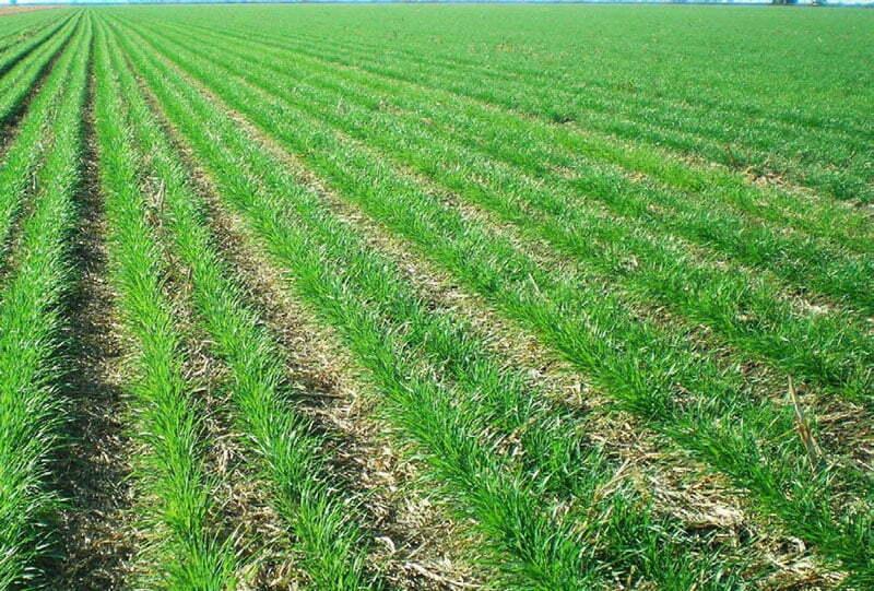 افزایش ماده آلی خاک در روش خاک ورزی حفاظتی