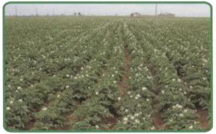 تناوب زراعی چیست