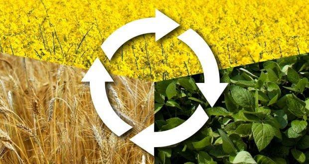 اصول صحیح تناوب زراعی