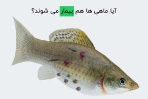 آیا ماهی ها هم بیمار می شوند؟