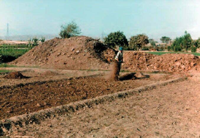 پخش کود در سطح مزرعه
