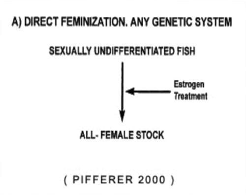 روش مستقیم تولید ماهیان تک جنس