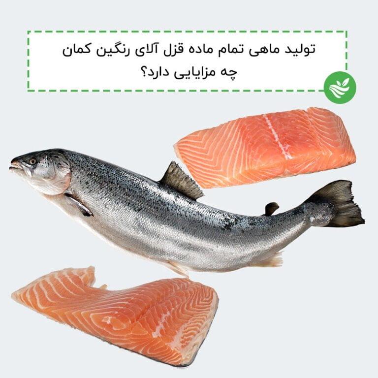 تولید ماهی تمام ماده قزل آلای رنگین کمان چه مزایایی دارد؟
