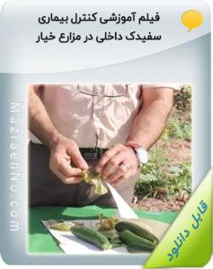 فیلم آموزشی کنترل بیماری سفیدک داخلی در مزارع خیار