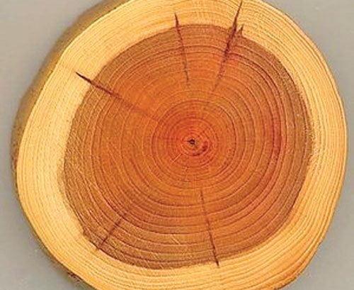 چوب درخت جگ