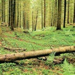 درباره چوب و قاچاق چوب چقدر می دانید؟