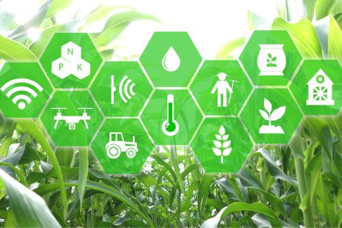 قانون بیمه محصولات کشاورزی