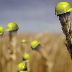 درباره بیمه محصولات کشاورزی بیشتر بدانید