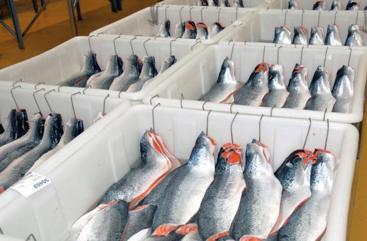 مخازن حمل ماهی و وسیله نقلیه جهت حمل محصولات شیلاتی