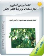دانلود کتاب آشنایی با بیماری سفیدک پودری ( حقیقی ) انگور