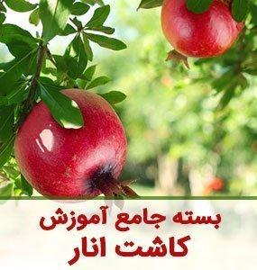 بسته جامع آموزش کاشت انار تا مصرف