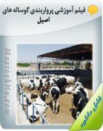 فیلم آموزشی پرواربندی گوساله های اصیل