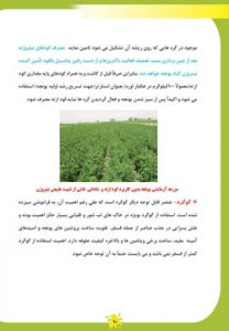 کتاب کاشت، داشت و برداشت یونجه در خوزستان