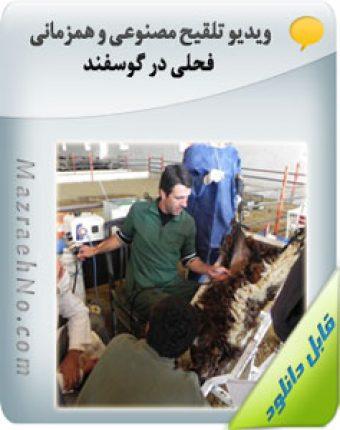 ویدیو تلقیح مصنوعی و همزمانی فحلی در گوسفند