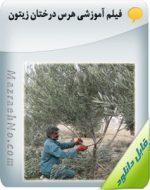فیلم آموزشی هرس درختان زیتون