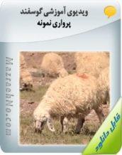 ویدیوی آموزشی گوسفند پرواری نمونه