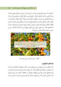 بسته کارآفرینی ترویج کشت و پرورش عناب